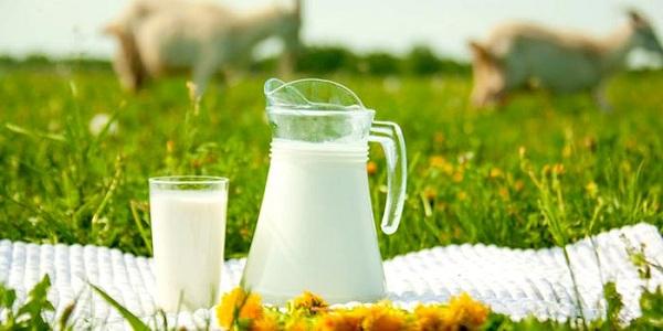 Ev yapımı süt