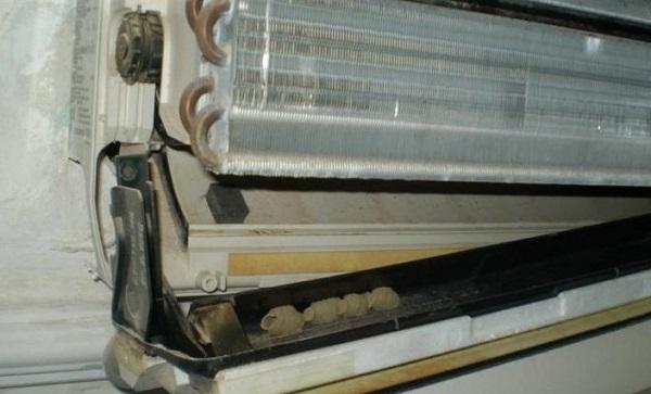 Insectes dans le climatiseur