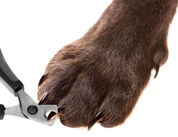 Guillotine pour chiens