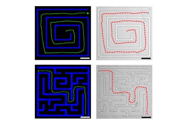 Options de labyrinthe
