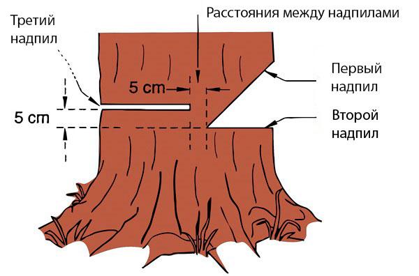 Règles abattant l'arbre