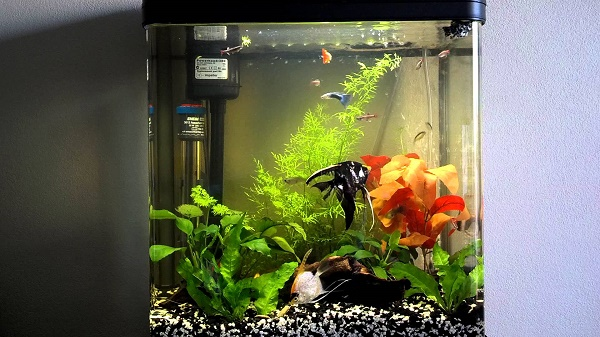 Pump i akvariet